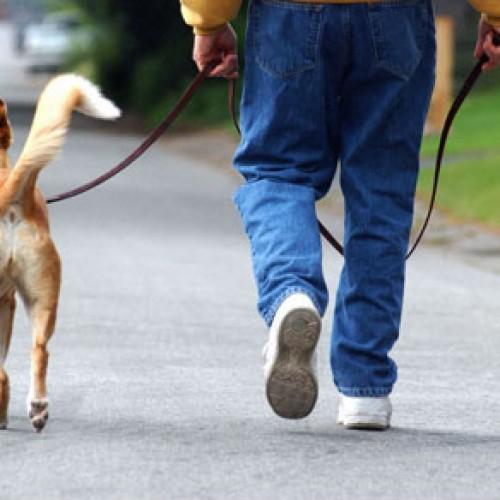 Dla kogo pies towarzyszący?