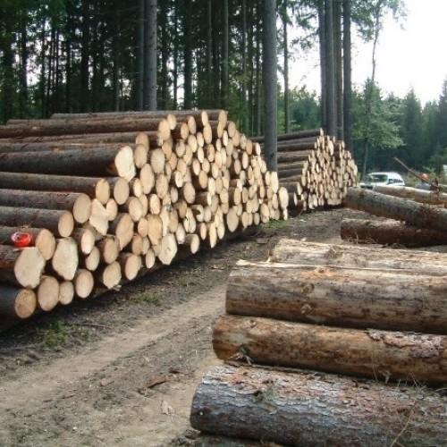 Czym jest podatek leśny?