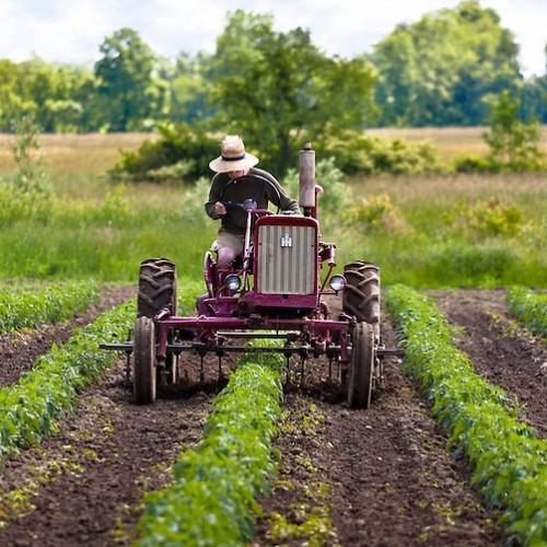 Rolnicy będą mogli łatwiej sprzedawać swoje produkty. Sejm kończy prace nad zmianami przepisów