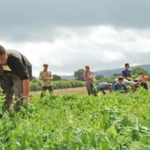 Przepisy o sprzedaży gruntów rolnych czekają na wyrok Trybunału Konstytucyjnego